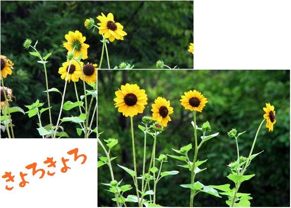 c0037200_711128.jpg
