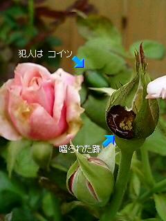 b0099813_911261.jpg