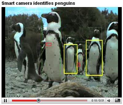 ペンギンの個体識別ソフトウェア_c0025115_20344923.jpg