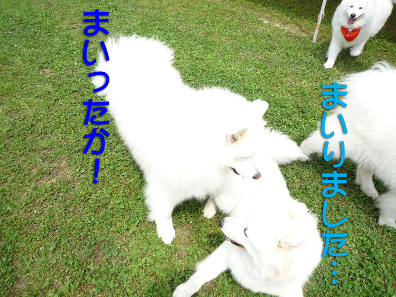 b0146024_149652.jpg