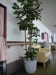 観葉植物_b0131135_10581928.jpg