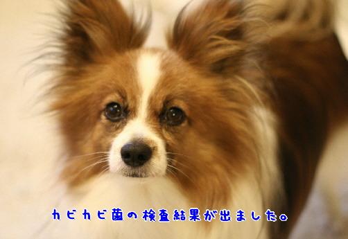 d0013149_9241245.jpg