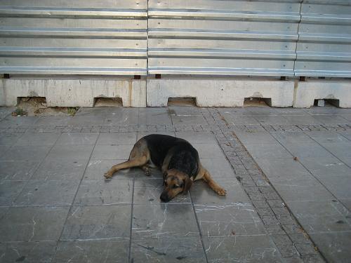 石畳にペッタリと寝ていたノラちゃん_f0037264_1614303.jpg