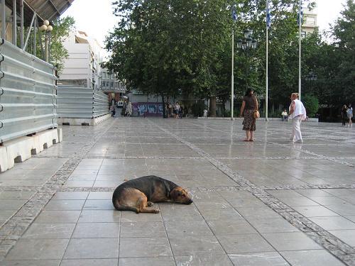 石畳にペッタリと寝ていたノラちゃん_f0037264_1654720.jpg