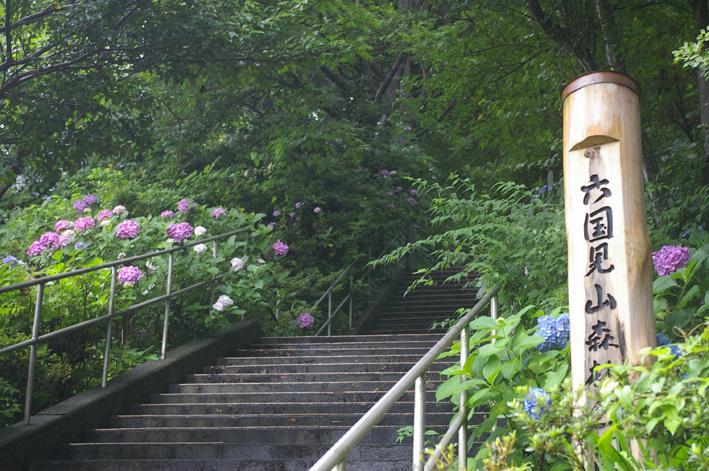 北鎌倉アジサイ便り(2008・6・29)_c0014967_3532873.jpg