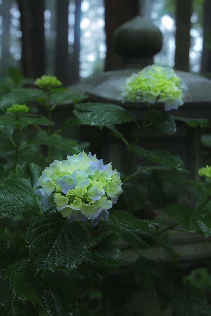 京都 西山三山 <善峯寺>  6_f0021869_9502652.jpg