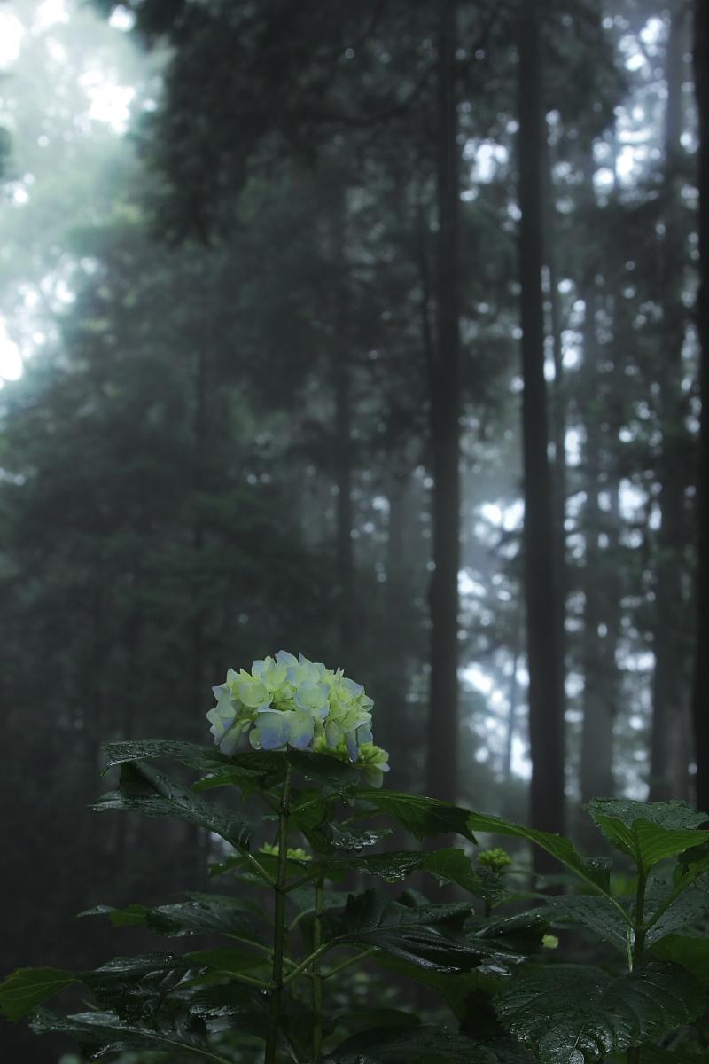 京都 西山三山 <善峯寺>  6_f0021869_952252.jpg