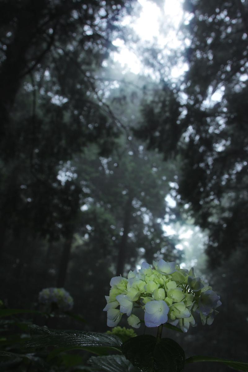 京都 西山三山 <善峯寺>  6_f0021869_953208.jpg