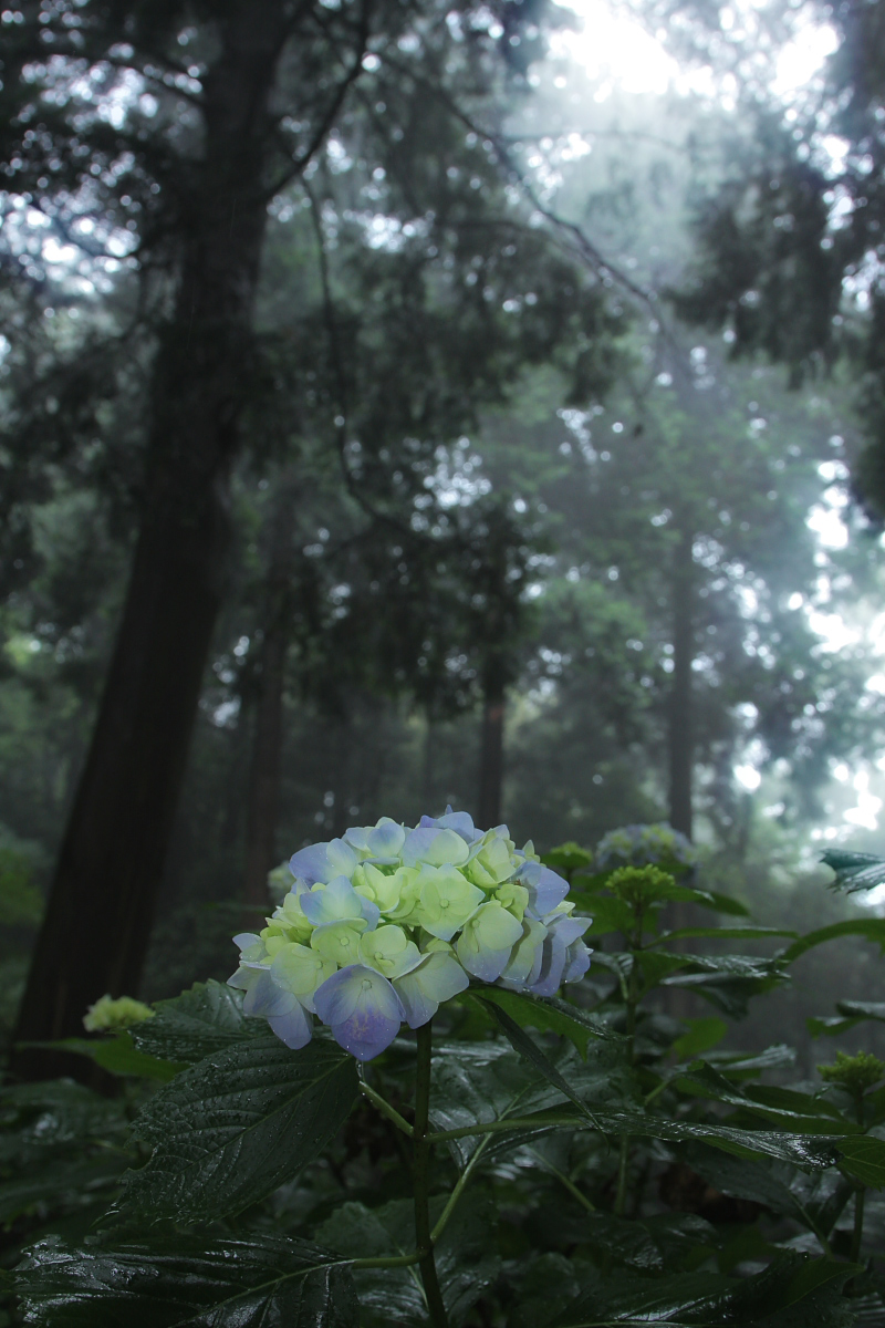 京都 西山三山 <善峯寺>  6_f0021869_953585.jpg