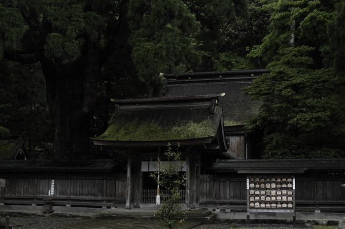 でっかい杉の木があちこちにありましたが、神社の奥にはさらにでっかい杉がおりました。古い建物と大きな木はずっと地域の人々に大事にされてきたんだなと感じました。三脚で撮りましたが、なんだか申し訳ない気持ちになったすっ。