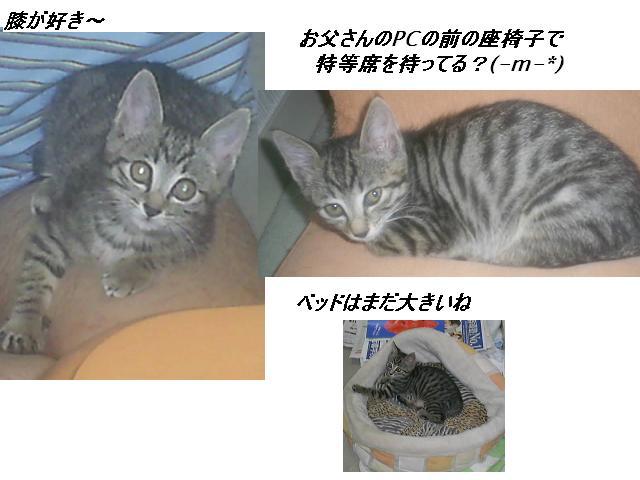 b0112380_2045466.jpg