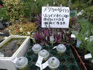 JA西三河 西尾市 憩の農園・バラ園_f0059988_9381487.jpg