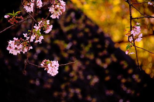 桜。_b0133890_128957.jpg