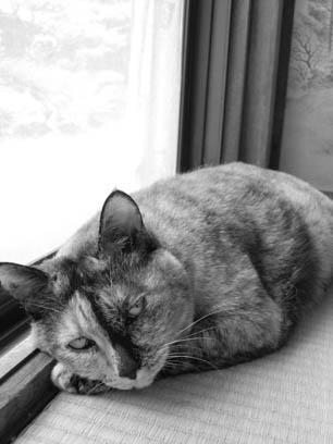 改めて我家の猫_e0015690_1141126.jpg