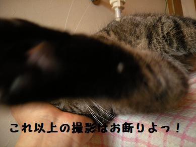 f0081100_13244231.jpg