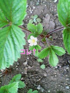 f0159503_17292468.jpg