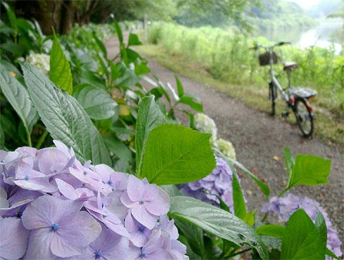 花見川サイクリングコース_c0137404_2314448.jpg