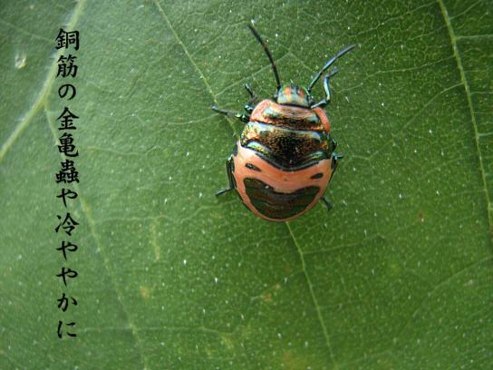 顔蟲_e0099713_22564547.jpg