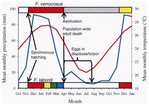 寿命が1年で、その4分の3を卵の中で暮らすカメレオン_c0025115_17501554.jpg