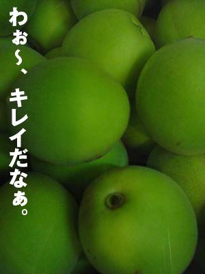 b0080632_521693.jpg
