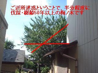f0031037_2017870.jpg