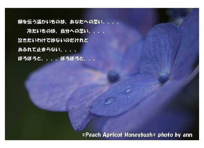 b0126044_91238.jpg