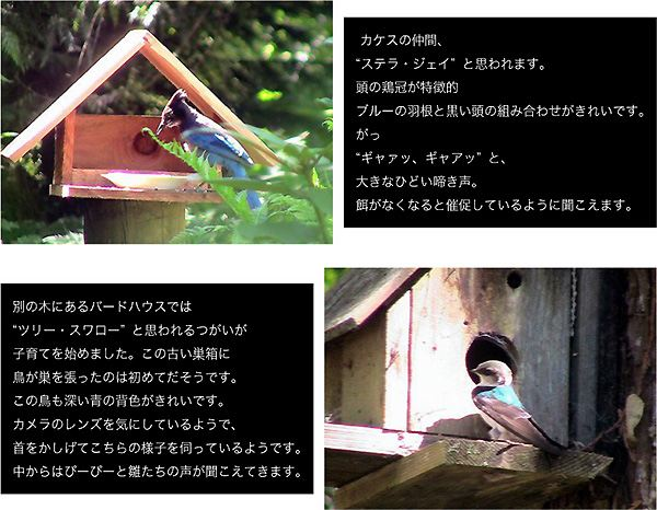 d0129145_416774.jpg