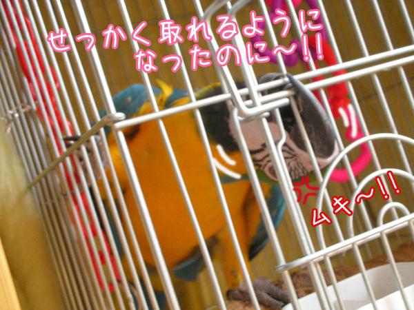 f0132055_042319.jpg