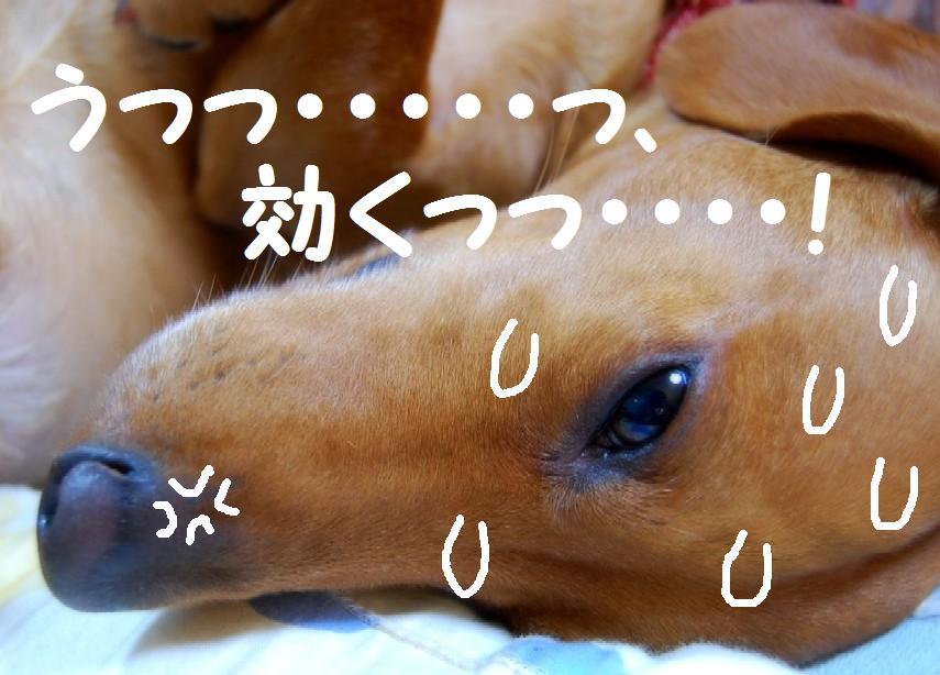 b0112758_2218594.jpg
