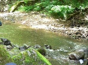 安達太良川上流の水生生物を整理する①_a0087378_4155833.jpg