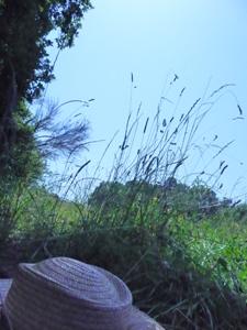 草原で昼寝_f0106597_0501583.jpg