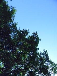 草原で昼寝_f0106597_0512284.jpg