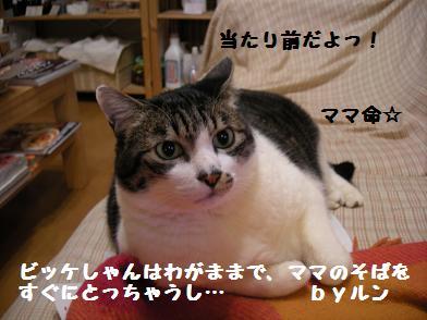 f0081100_17441112.jpg