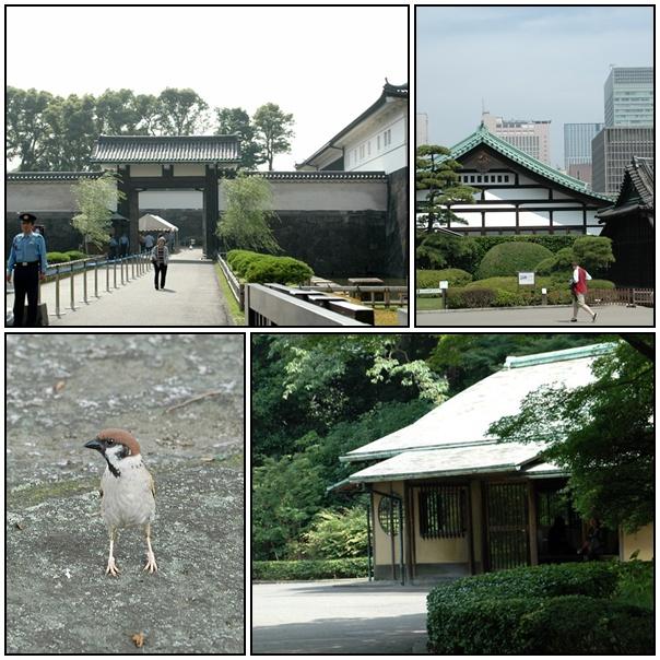 7月1日、皇居お濠のこぶちゃん_f0012718_13505786.jpg