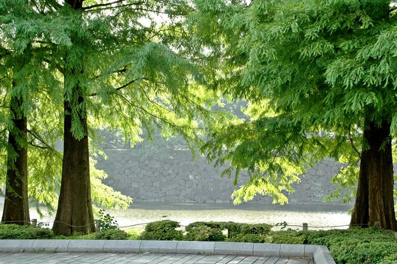 7月1日、皇居お濠のこぶちゃん_f0012718_1438516.jpg