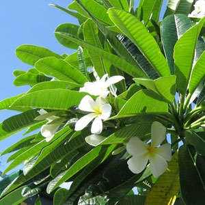 ハワイだから・・_c0024729_22144626.jpg