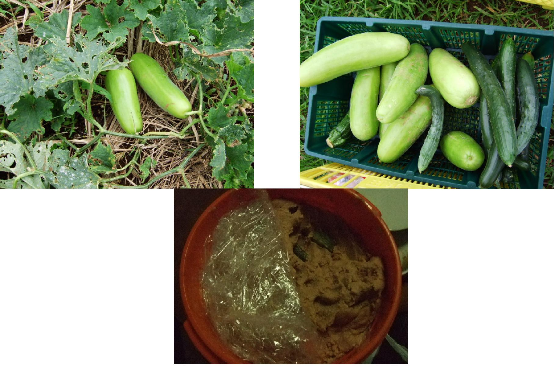 果物がカラスにやられた。クヤシイー_b0137932_2033456.jpg