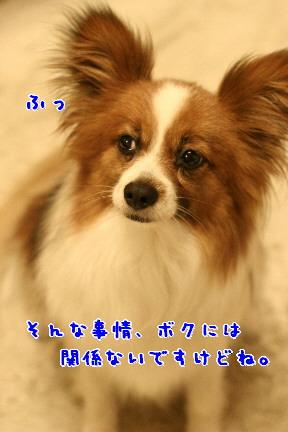 d0013149_21555862.jpg