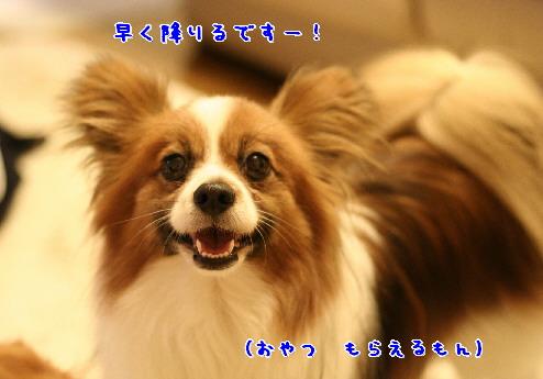 d0013149_223221.jpg