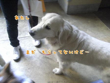 d0013149_22493640.jpg