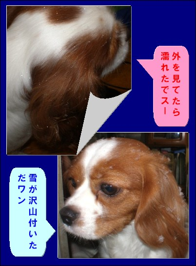b0141756_22563241.jpg