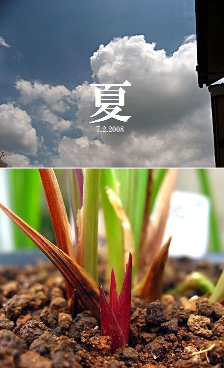 ◆中国奥地蘭「豆弁蘭赤花」の芽           No.310_d0103457_2350431.jpg