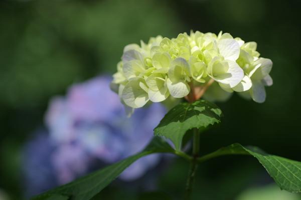 ご近所の花たち_d0123171_17292431.jpg