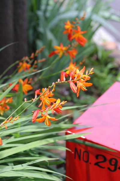 ご近所の花たち_d0123171_1729329.jpg