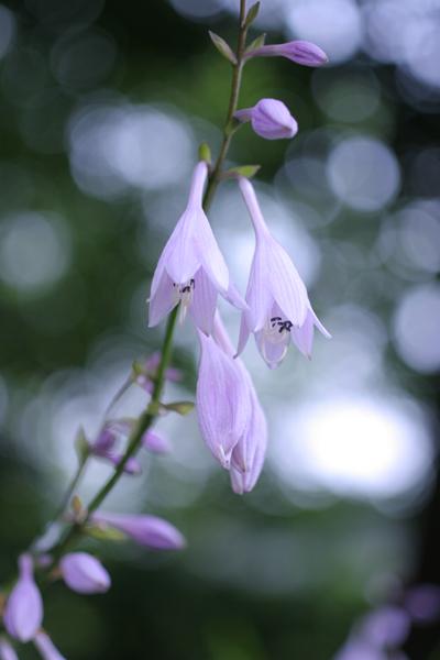 ご近所の花たち_d0123171_1729334.jpg