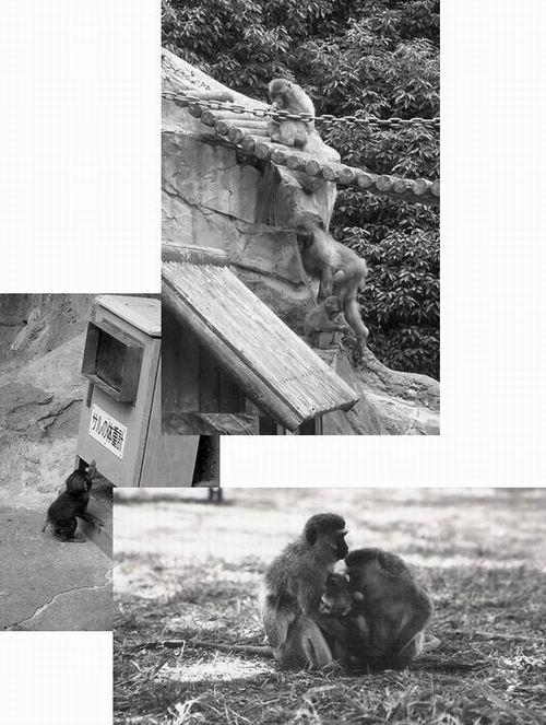 サル仲間で最北に住むニホンザルと、赤道が横切るケニアのサル_f0045090_1515823.jpg