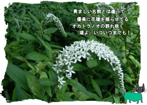 f0137096_1329274.jpg