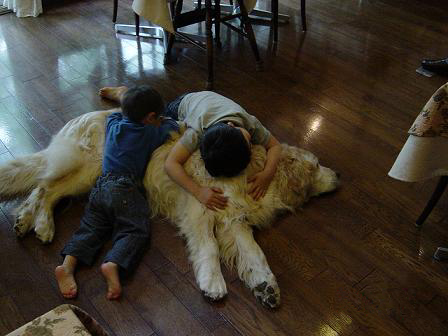 子供は大きくなり、犬は小さくなって・・・_f0064906_20441010.jpg