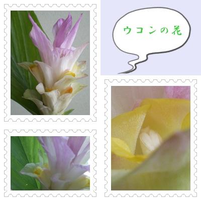 b0052108_16282973.jpg