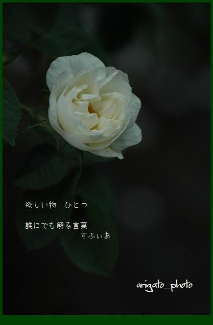 b0152416_1752311.jpg